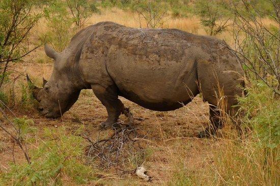Not For Sissies Tours & Adventures: Pilanesberg