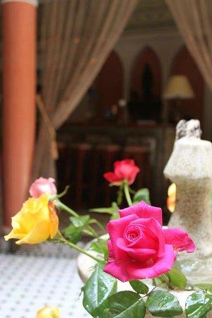 Riad El Wiam: La fontaine aux roses