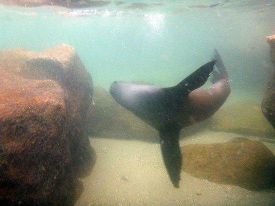 Abel Tasman Seal Swim: Making dives around you