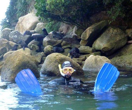 Abel Tasman Seal Swim: Dozens of seals and pups