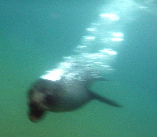Abel Tasman Seal Swim: Blowing air bubbles