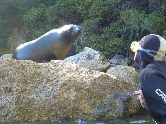 Abel Tasman Seal Swim: look at me