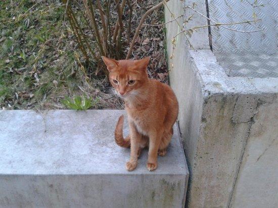 Backpackers Villa Sonnenhof: Gatico que nos visito todas las tardes en el jardín