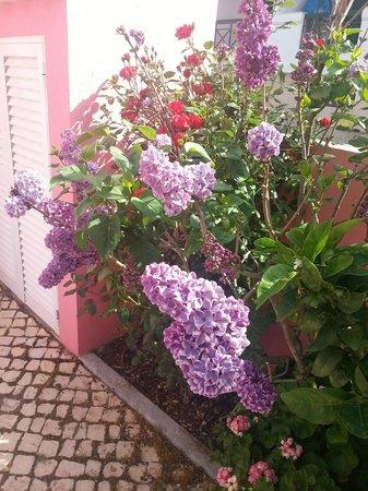 Casa Viana Guesthouse : Flowers -21.04.2013