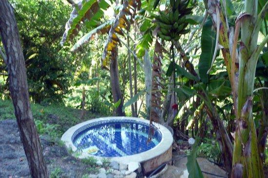 Now Amber Puerto Vallarta: to sulphur pools at horse riding adventure