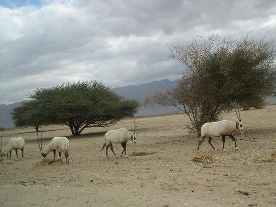 Hai Bar - Wildlife Reserve : Hai Bar