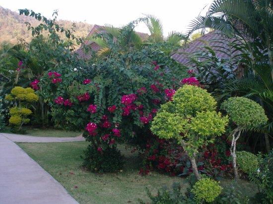 Maekok River Village Resort: Underbara trädgården