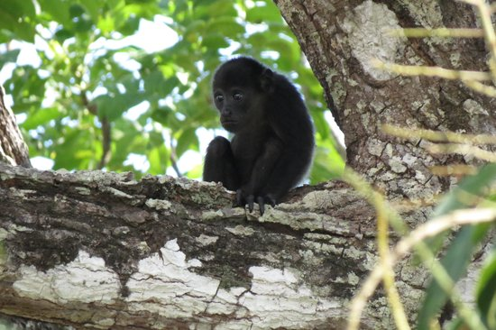 Hotel Boutique Lagarta Lodge: baby in mango tree