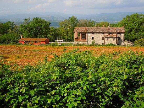 Villa Selva Country House : Villa Selva, la struttura vista dalla stradina