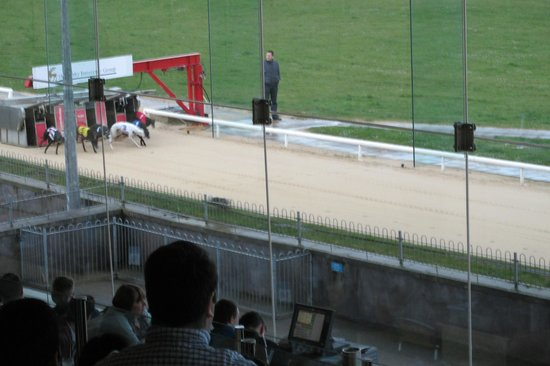 Greyhound Stadium - Curraheen Park : and they are off