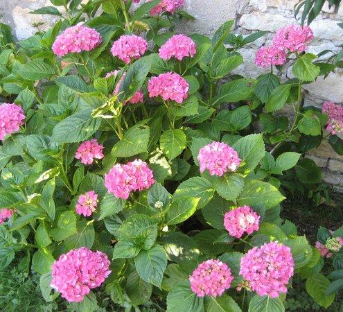 Saint-Georges-du-Bois, France : Les fleurs du jardin