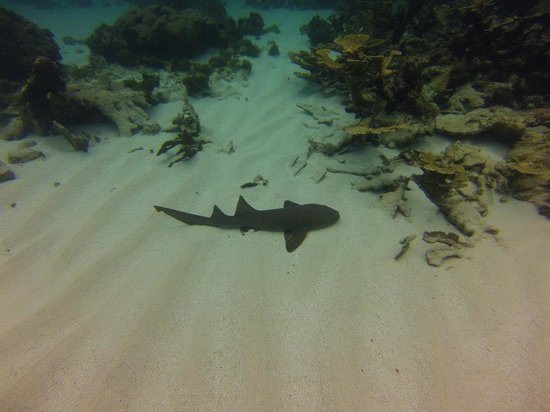 Dive Little Corn - Day Dives: The dangerous nurse shark!!!