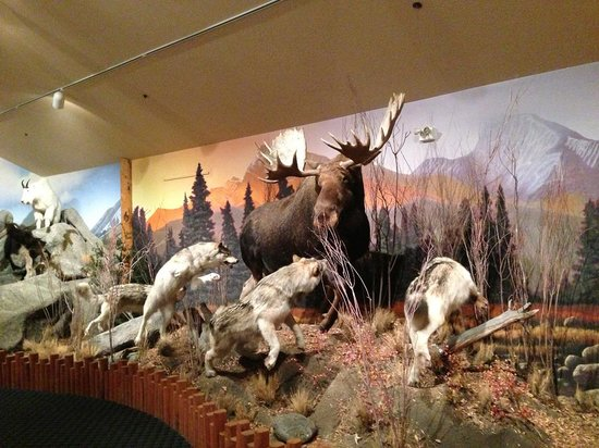 Majestic View Lodge: One of the exhibits at the wildlife museum at the Lodge