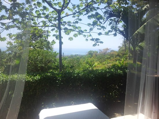 Oxygen Jungle Villas: View from my private terrace