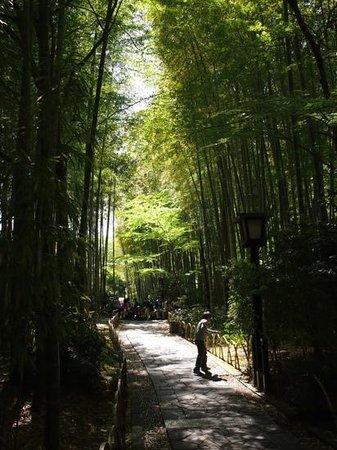 Chikurinnokomichi
