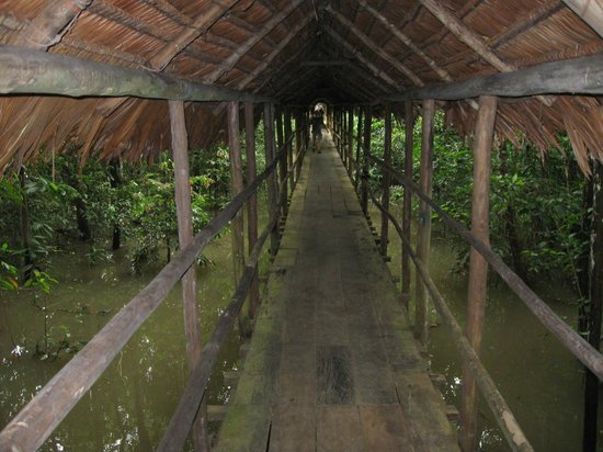 ExplorNapo Lodge: Walk way - if you shine flashlight at the cieling at night, you can see creatures (shimmering ey
