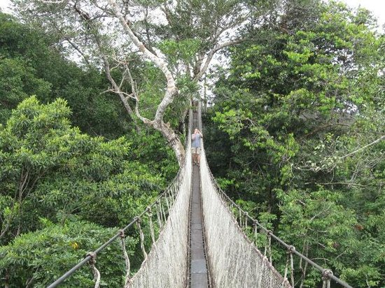 ExplorNapo Lodge: Canopy Walk