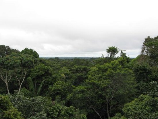 ExplorNapo Lodge: View from the canopy