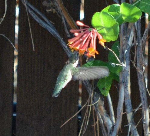 Villas at Poco Diablo: hummingbird