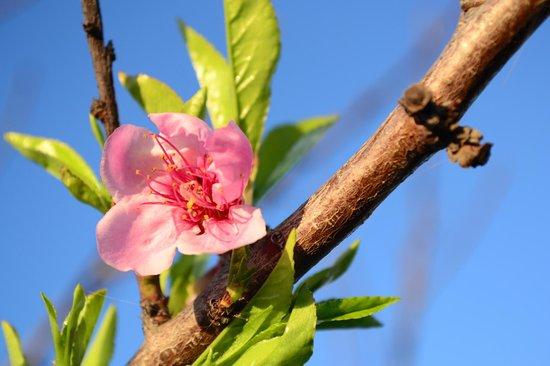 Finca de la Florida Hotel: Blossom on the grounds