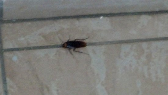 "Alamanda Resort: Roach at the entrance of my  ""room"""