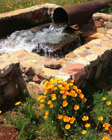 Anselmo Vineyards : California poppies on the winery grounds
