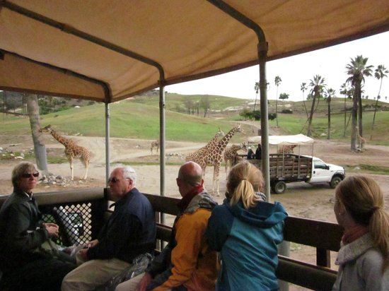View From Our Private Tour  Picture Of San Diego Zoo Safari Park Escondido