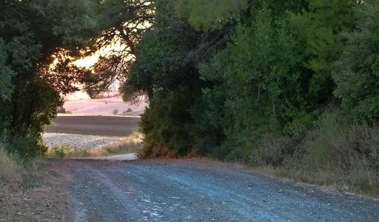 Borgo di Pomaia: tra i sentieri....