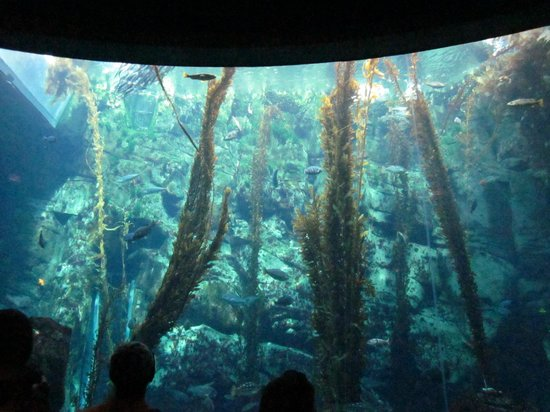 Aquarium In The Science Center Picture Of California