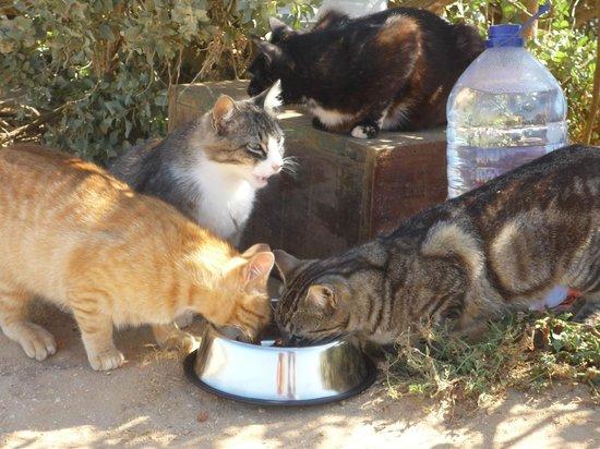 Nandi Charity Shop: Dankbare Katzen