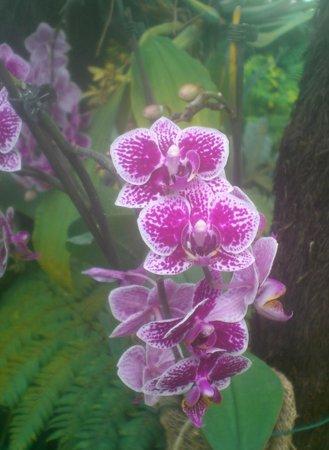 Gärten der Welt: Flower in Balinese Pavilion
