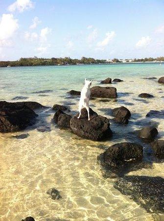 un toutou  a la plage