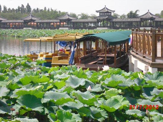Sanshui Lotus World