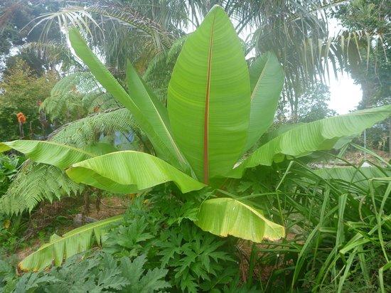 Rongo Backpackers: Beautiful Palm