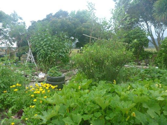 Rongo Backpackers: Organic Garden