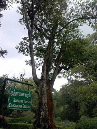 Sim`s Park: rudhraksh.