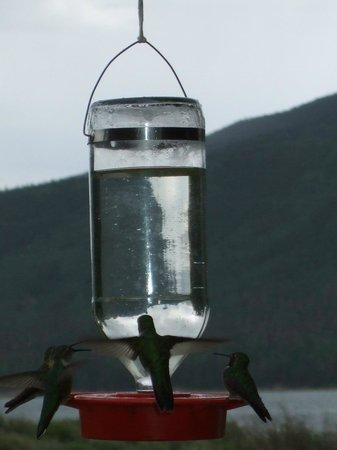Twin Lakes Roadhouse Lodge: Wildlife