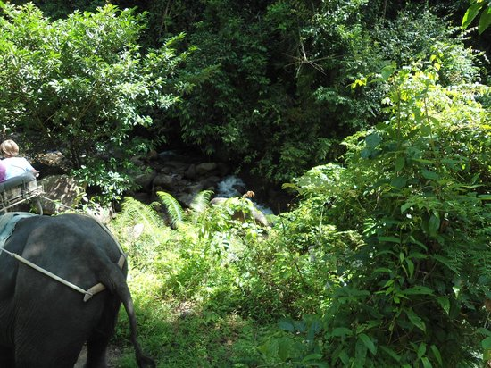 Anda Adventure - Day Tours: View from our Elephant