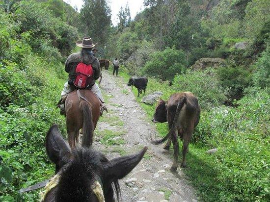 Pumamarca Ruins: On the way to Pumamarca