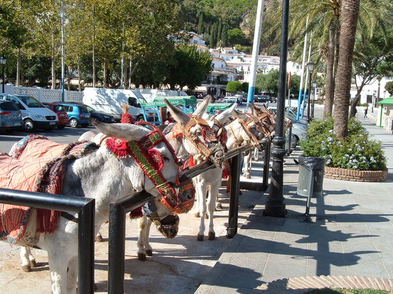Mijas, España: Donkey taxi
