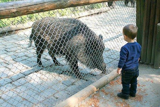 Wildpark Dusseldorf: pig