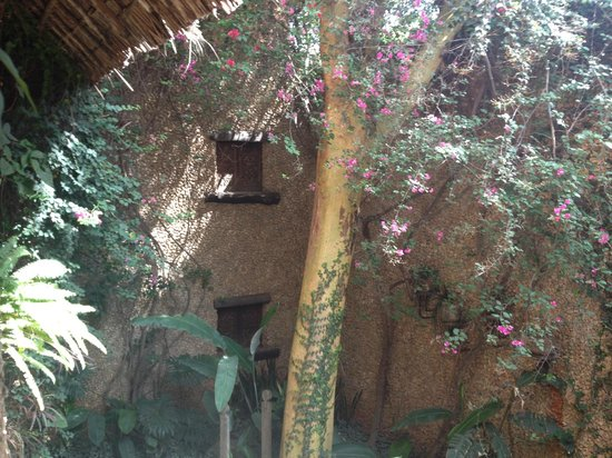 African Heritage House: garden inside house