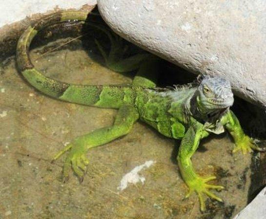 El Serpentario De La Paz: serpentario