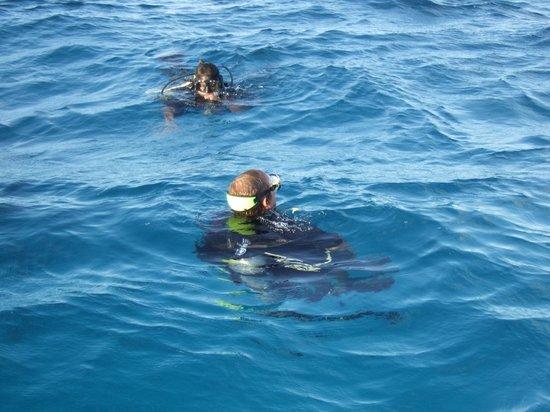 Blackbird Caye Resort: Successful Discover Scuba Open Water