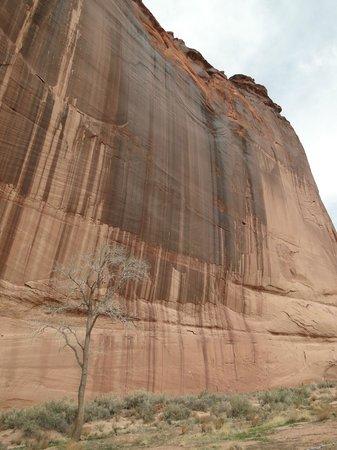 White House Ruin: Mammoth 500' water-streaked cliff next door