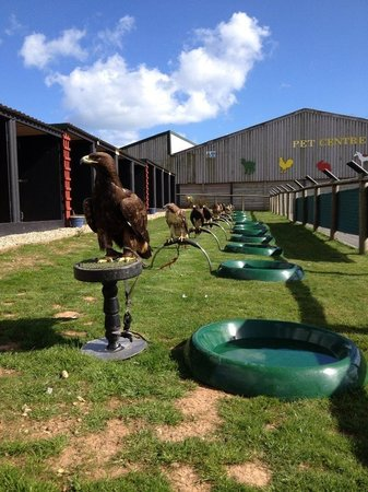 Hawkridge Bird of Prey Centre