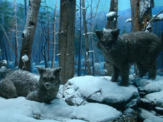 State Museum of Pennsylvania: Natural History
