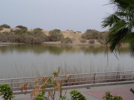 Oasis Maspalomas: View from balcony across lagoon to the sand dunes