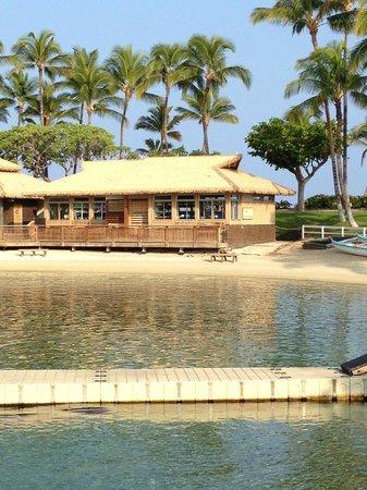Hilton Waikoloa Village: dolphin area