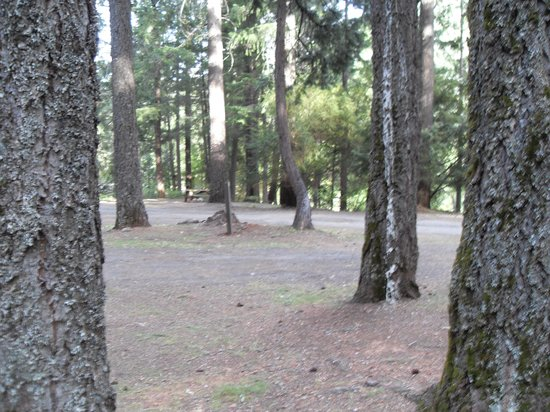 Railroad Park Resort: campground view